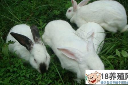 养殖兔子喜欢吃什么食物? _动物养殖(养兔子的技巧)