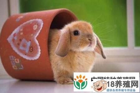 为什么养兔子不吉利? _动物养殖(养兔子的技巧)
