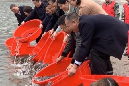 """长江上游七百万珍稀特有鱼苗在长江""""安家落户""""!"""