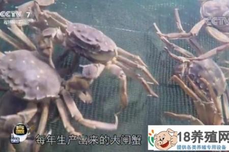 互联网+给大闸蟹养殖带来了很好的收益 _水产养殖(养河蟹的技巧)