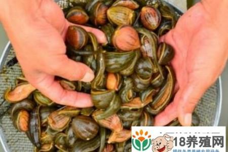 嘉鱼县:养殖水蛭让几个年轻人走上了创业致富的道路 _水产养殖(养水蛭的技巧)