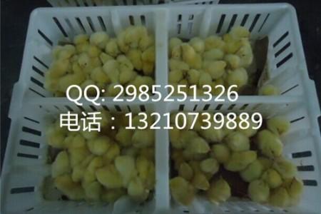 鸡运输笼尺寸坚固耐用鸡周转箱厂家