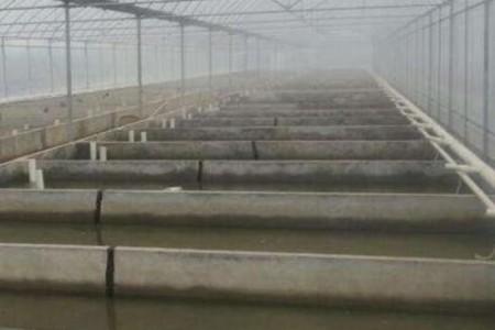 温室怎么养泥鳅?泥鳅养殖有哪些注意事项?