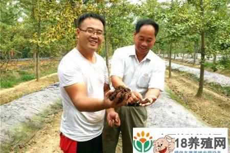 在一个年轻人的树下养蚯蚓的净利润是1万元 _昆虫养殖(养蚯蚓的技巧)