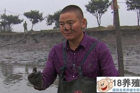 沈文根:龟掺黑鱼养鱼一年卖一千多万元 _水产养殖(养乌龟的技巧)