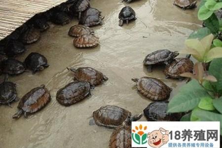 2016年,龟价遇冷,龟农该如何应对 _水产养殖(养乌龟的技巧)
