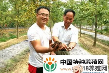 树下养1亩地,每年净利润1万元 _昆虫养殖(养蚯蚓的技巧)