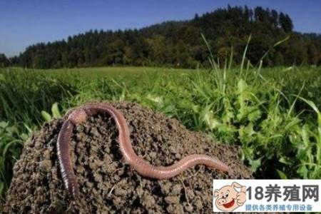 小蚯蚓应用广泛,蚯蚓养殖在生态农业中的三大应用 _昆虫养殖(养蚯蚓的技巧)