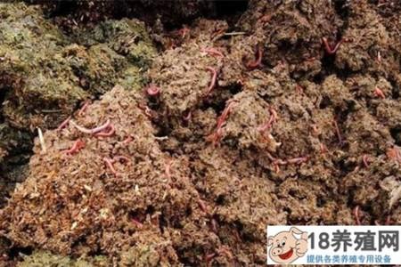 猪粪养蚯蚓亩产高达3万元,生态兴旺! _昆虫养殖(养蚯蚓的技巧)