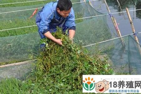 生态鳗鱼网箱养殖成为农村致富的好项目 _水产养殖(养黄鳝的技巧)