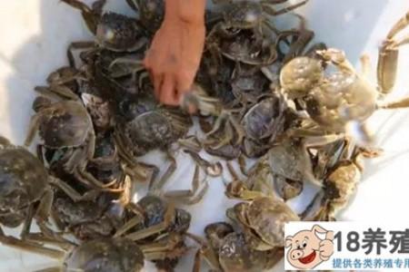 庄宏根养大闸蟹的方法很神秘,养完螃蟹水更清了! _水产养殖(养河蟹的技巧)