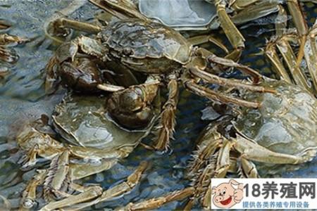 2018年养大闸蟹赚钱吗?大闸蟹养殖的成本是多少? _水产养殖(养河蟹的技巧)