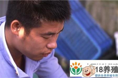 广州小伙沈文昌养草龟赚快钱,一年卖6000万 _水产养殖(养乌龟的技巧)