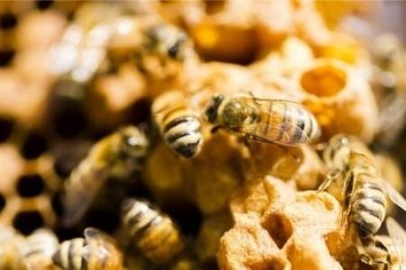 养蜂人冬天应该注意什么?