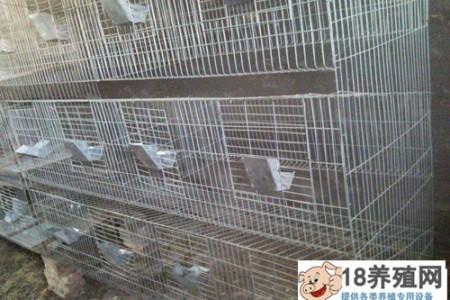 鹌鹑养殖笼的选择和建造要求 _禽类养殖(养鹌鹑的技巧)
