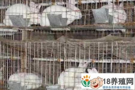 你为什么没有钱养兔子 _动物养殖(养兔子的技巧)