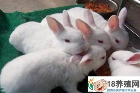 兔子喜欢人们的10种表演。你看怪不怪 _动物养殖(养兔子的技巧)
