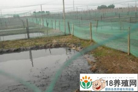 2020年牛蛙价格预测多少? _水产养殖(养牛蛙的技巧)