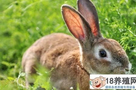 2020年养兔子要多少钱? _动物养殖(养兔子的技巧)