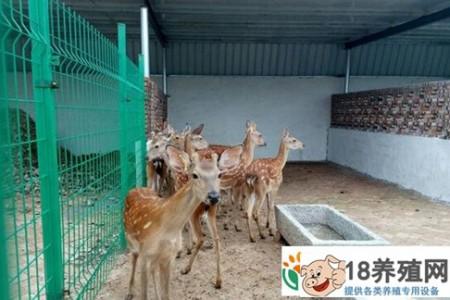梅花鹿人工喂养的饲料和配方是什么? _动物养殖(养梅花鹿的技巧)