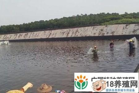 南美白对虾养殖的风险与收益分析 _水产养殖(养对虾的技巧)