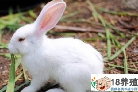 养殖10只母兔年利润是多少? _动物养殖(养兔子的技巧)