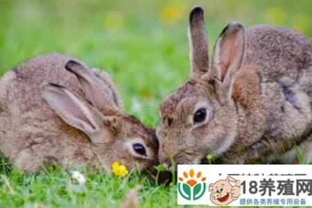 现在市场上兔子的价格是多少? _动物养殖(养兔子的技巧)