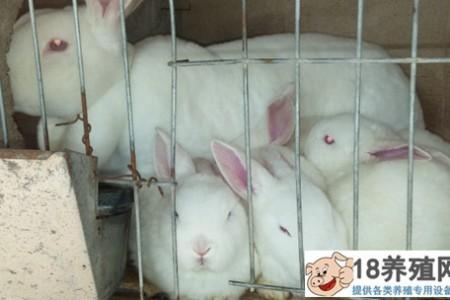 养兔容易吗?养殖100只兔子有什么好处? _动物养殖(养兔子的技巧)
