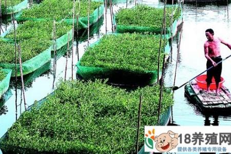 望江:黄鳝网箱养殖及水稻种植技术 _水产养殖(养黄鳝的技巧)