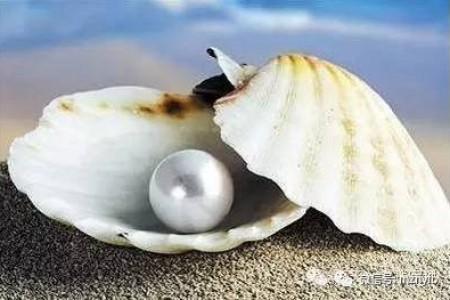 东北适合养珍珠蚌吗?珍珠蚌养殖注意事项