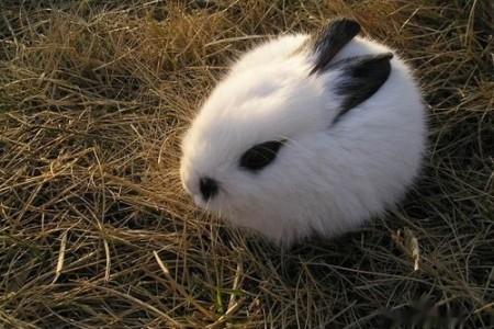 如何降低养兔成本?来看看这里!