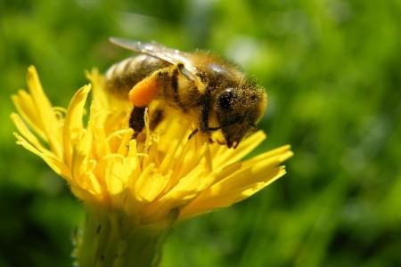 蜜蜂会逃跑吗?蜜蜂逃跑前有哪些征兆?
