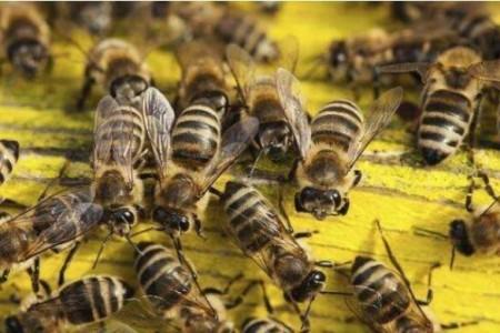 中国蜂双王集团的优劣势
