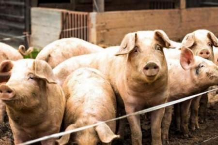 江苏泰州:保险+期货新模式打组合拳稳定生猪生产复苏势头