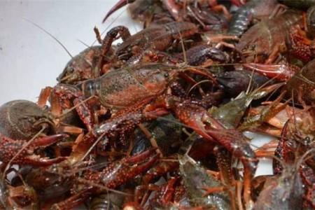 龙虾河蟹混养技术