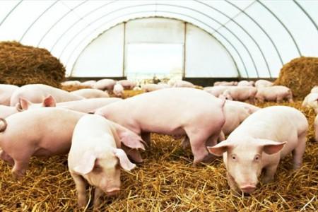 养猪周期全面展开。未来猪价会涨还是跌?