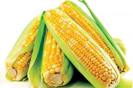 玉米是补齐后第二节丢的吗?