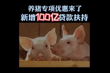 《冀观察》专栏:养猪专场新增100亿贷款支持