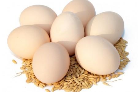 鸡蛋价格可以预计在第三季度蛋鸡的库存平衡