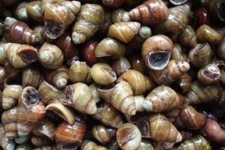 蜗牛养殖管理要点