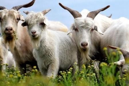 羊风湿有什么症状?羊风湿怎么治?