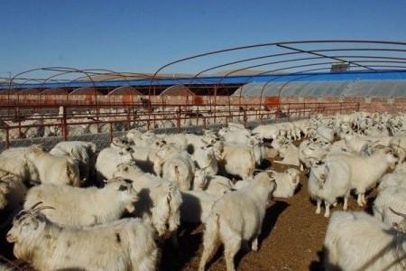 羊寄生虫病有哪些?羊常见寄生虫病诊断!