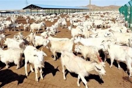 如何降低养羊成本,提高养羊利润?