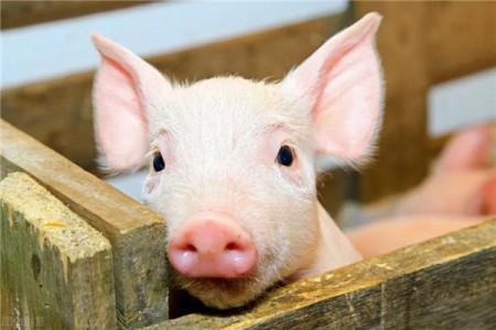 饲料价格上涨,反着陆,畜禽食品短缺...2020年饲料行业对你影响最大的是什么?