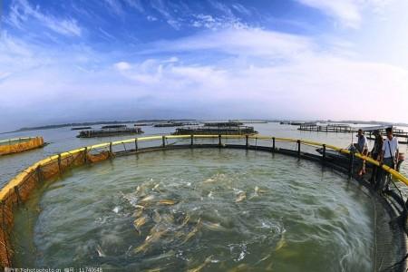 每平方米笼鱼能养多少斤?网箱养鱼有什么优缺点?