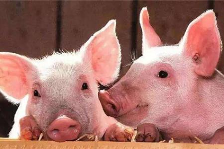 2020年12月第三周畜产品和饲料市场价格