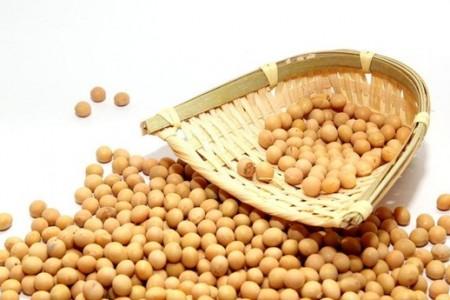 深圳海关首次截获进口大豆中的检疫性有害生物西苋