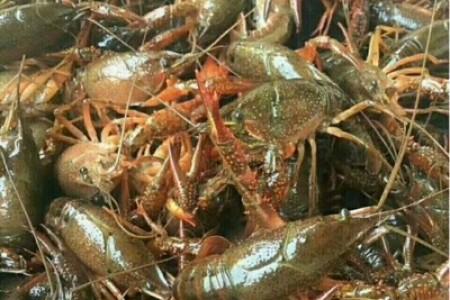 中国第一家小龙虾质量检测中心落户湖北潜江