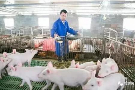 我们来看看大型养殖场是怎么做消毒工作的