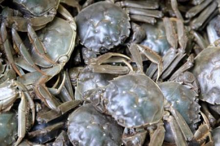 河蟹的繁殖条件是什么?河蟹文化有哪些误区?